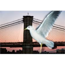 Brooklynský most. 2006